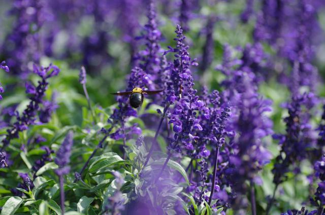 7紫の林に向かって