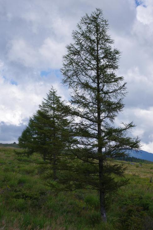 21木々のリズム