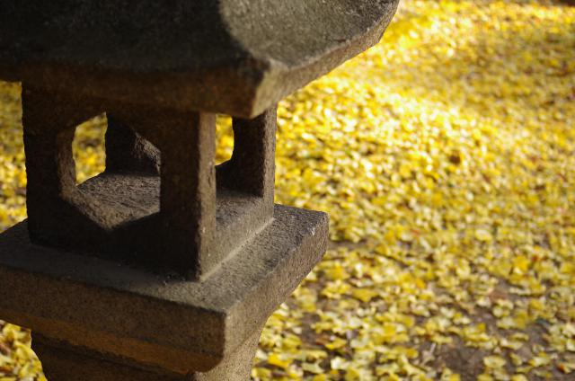 9 黄色の絨毯