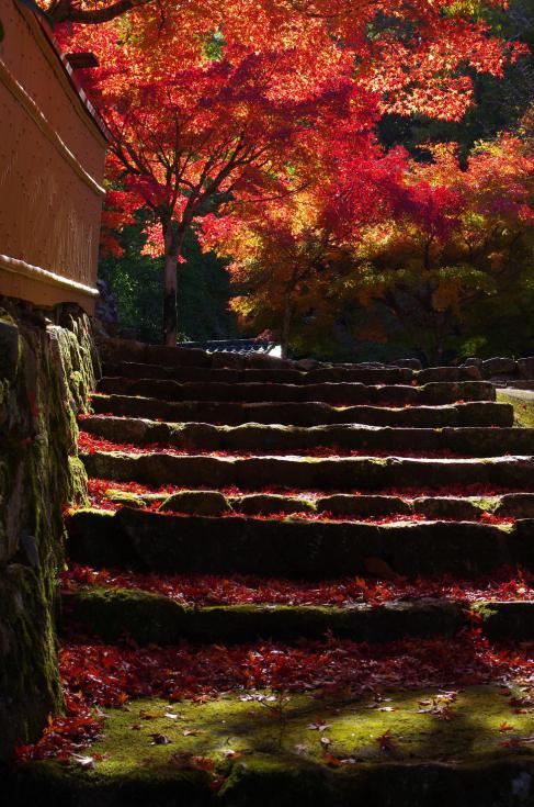 鮮~紅葉色の階段~