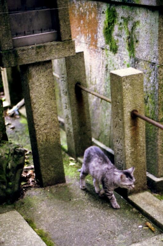 熊鷹社の猫