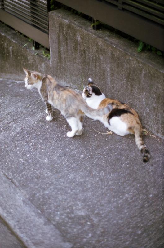 裏参道の猫2
