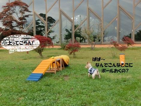 20121019019.jpg