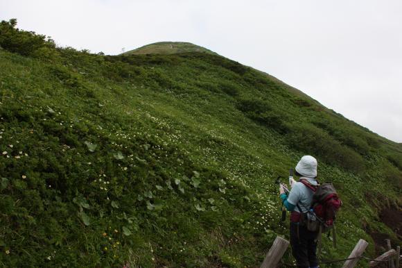 男女岳チングルマ1