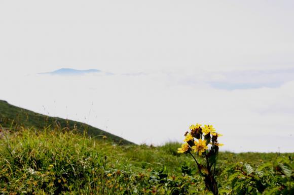 焼石山頂11