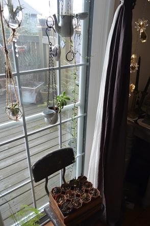 窓辺のハンギンググリーン