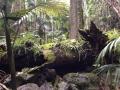 Tamborine 201401 10 アロマスクール マッサージスクール オーストラリア