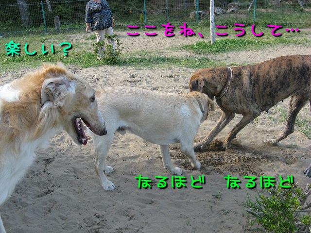 IMG_0067_20130605231911.jpg