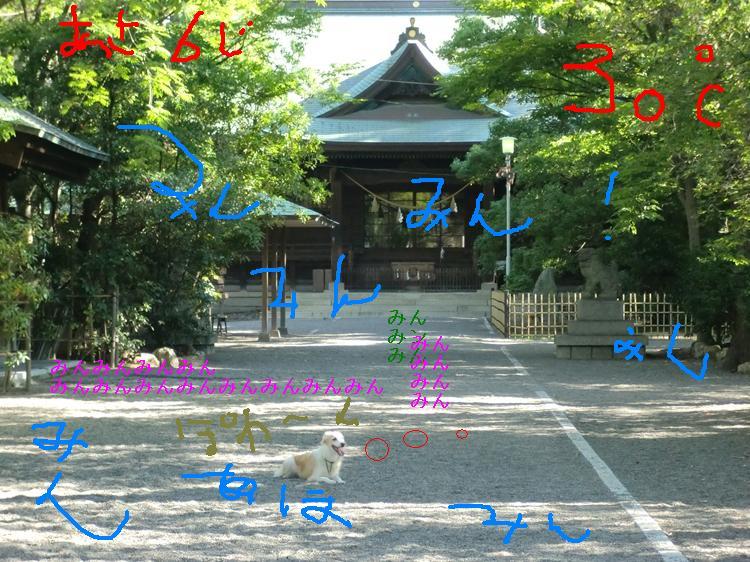 CIMG1569_R_20120807085218.jpg