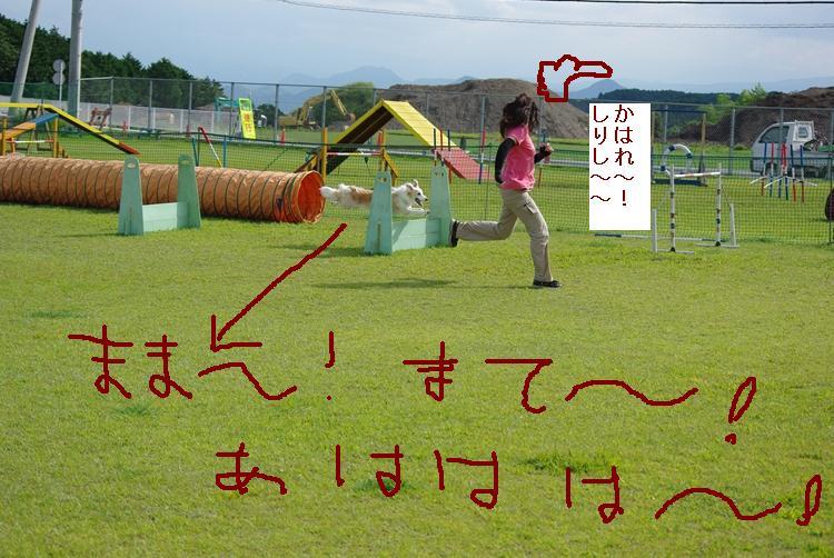 IMGP9466_R_20120912131747.jpg