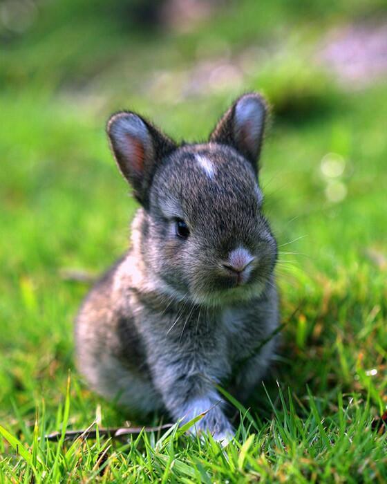 1月11日 14ウサギ