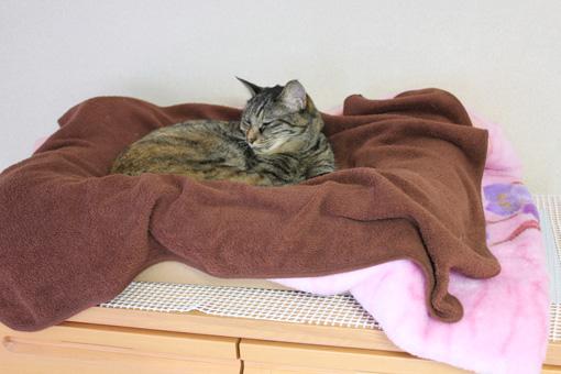 冬ベッド②