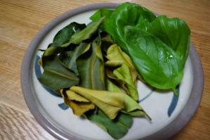 20120512-06 kaffir lime leaves  basil (800x532)
