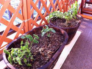 20120423-03 herbs (800x598)
