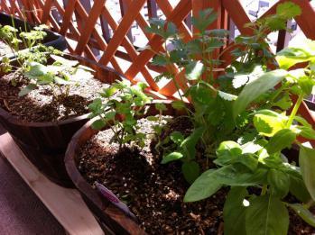20120429-02 herbs (800x598)