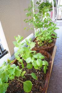 20120516-09 herbs (532x800)
