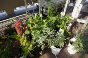 20120516-05 flowers  herbs (800x532)