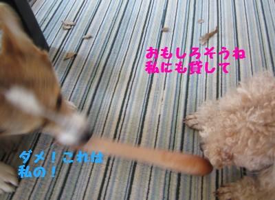 IMG_0908.jpg