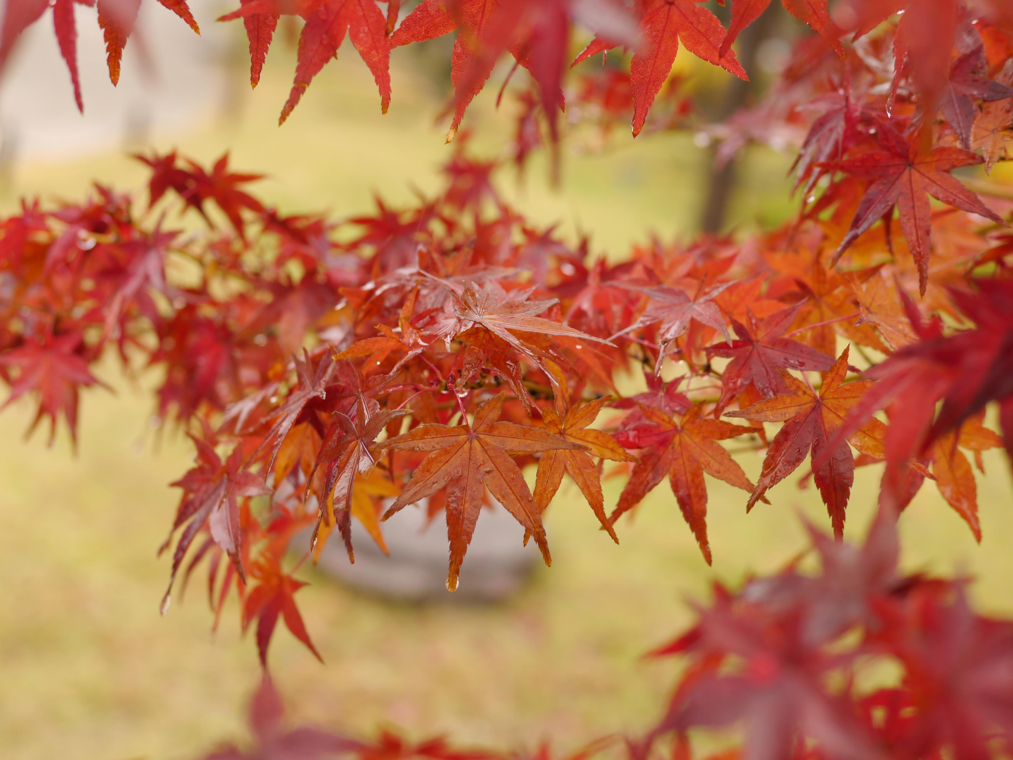 東寺convert_20121129201223