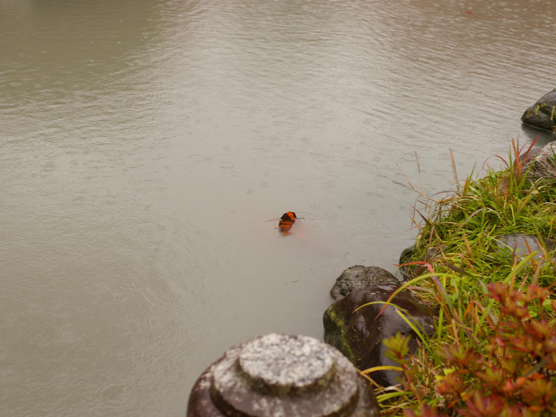 東寺謎の生物convert_20121129202654