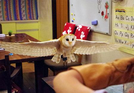 飛ぶフクロウ