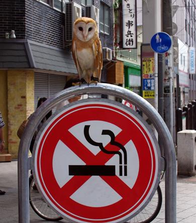 禁煙フクロウ