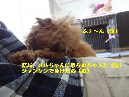 DSC05143_convert_20120428214342☆