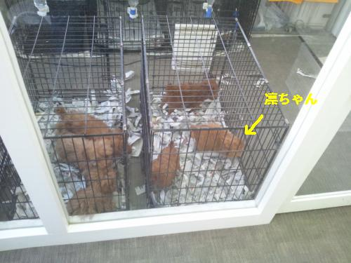 DSC_0099_convert_20120331213537☆