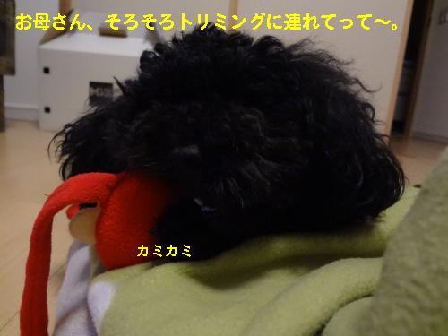DSC04717_convert_20120422090705.jpg