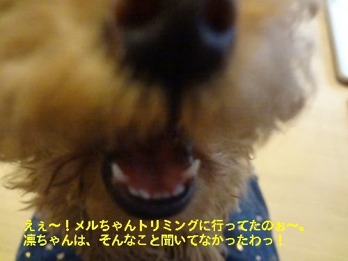DSC04807_convert_20120422091259.jpg