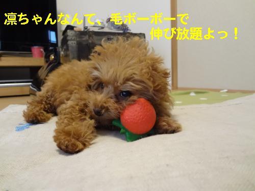 DSC04823_convert_20120422092011.jpg