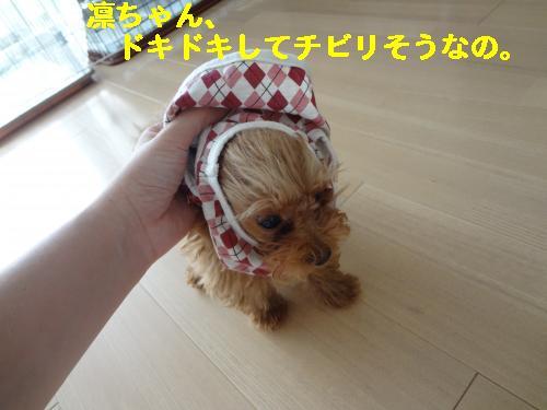 DSC05019_convert_20120501204847.jpg