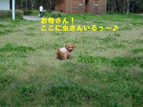 DSC05062_convert_20120502231359.jpg