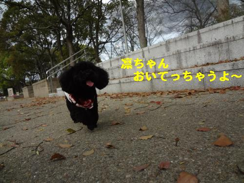 DSC05103_convert_20120502234326.jpg