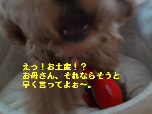 DSC05146_convert_20120428210434.jpg