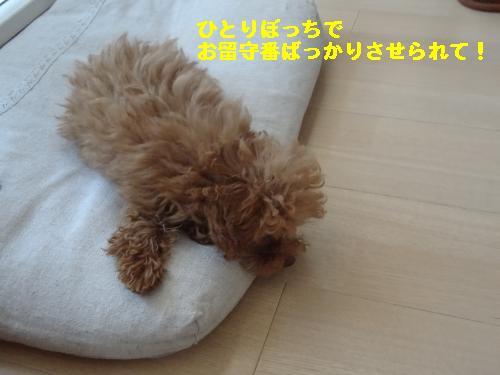 DSC05150_convert_20120428210805.jpg