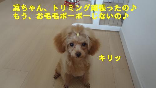 DSC05375_convert_20120514210728.jpg