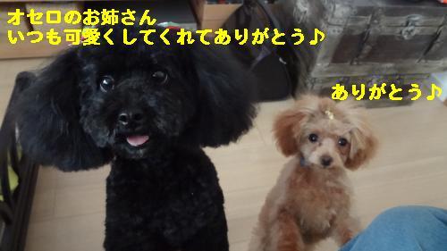 DSC05386_convert_20120514213153.jpg