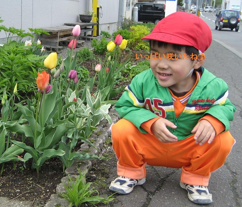 20120507_musuko_tulip_02.jpg