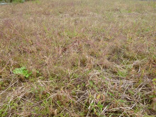 草刈管理畑20121018