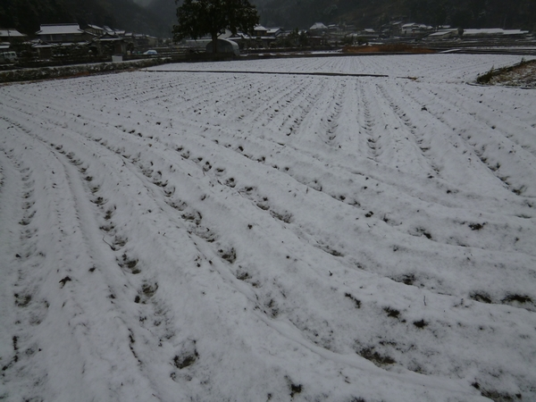 田んぼに雪20121228