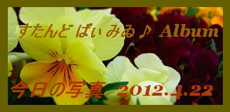 アルバム用 今日の写真2012.4.22