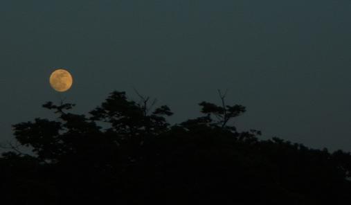 2012.5.11分 GW中の写真おでかけ②午後 10