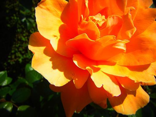 2012.5.25分 19日のバラ園巡り 3