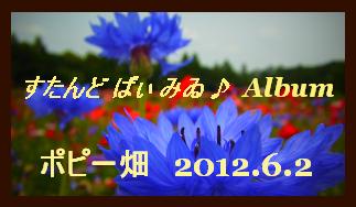 アルバム用 ポピー畑 2012.6.2