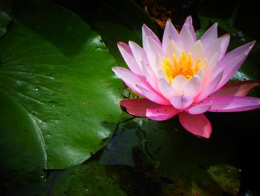 2012.6.16 先週の菖蒲祭り! 8
