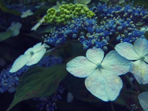 2012.6.16 先週の菖蒲祭り! 6