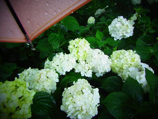 2012.6.17 ソッコーで写真ペタペタw 4