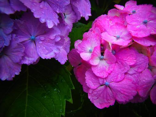 2012.6.17 ソッコーで写真ペタペタw 3
