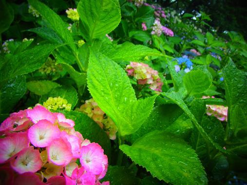 2012.6.17 ソッコーで写真ペタペタw 1